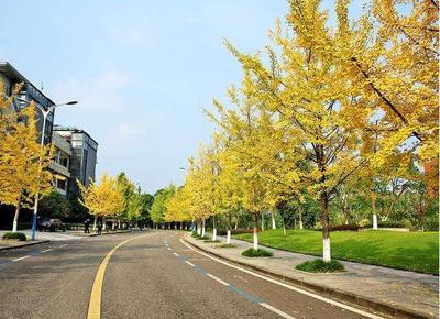 希望长青—树木认养项目